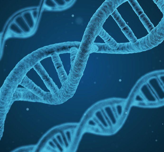Animais geneticamente modificados: o que tem a dizer o prof. Dr. Carlos Buxadé (UPM – Espanha)?